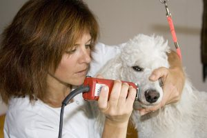 how-to-groom-a-dog-face-with-clippers