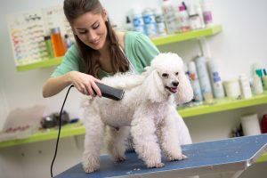 how-to-groom-a-dog-with-clippers