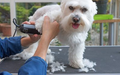How to Groom a Dog With Clippers at Home in 7 Steps