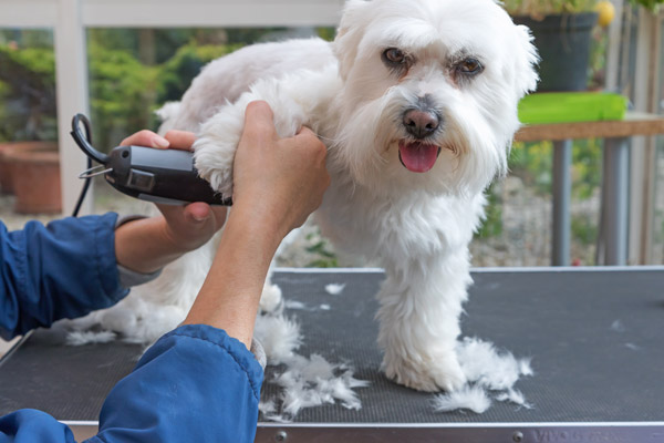 how-to-groom-a-dog-with-clippers-at-home