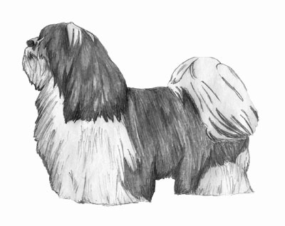 Havanese traditional coat