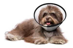 does-neutering-a-dog-calm-them-down