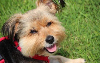 Do Dogs Laugh?