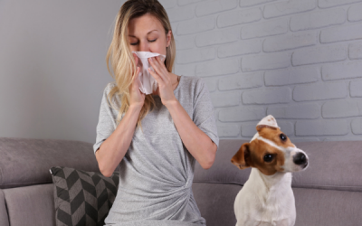 What Causes Dog Allergies In Humans?