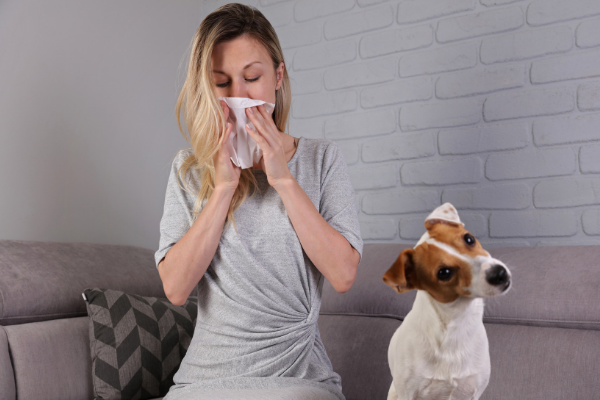 good-dogs-for-allergies