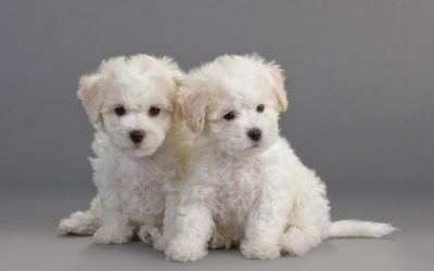 Puppy Development Stages