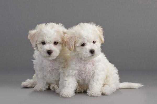 puppy-development-stages