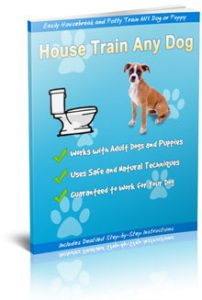 How to house train any dog in 7 days or less!