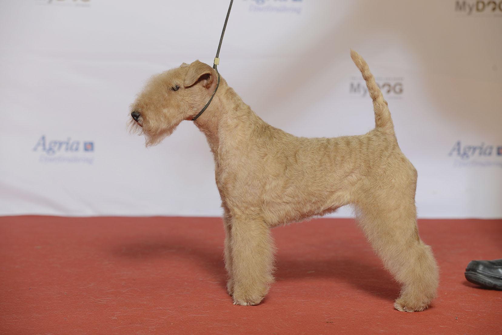 Health of Lakeland Terrier
