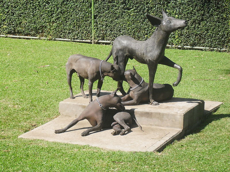 are-xoloitzcuintli-good-pets