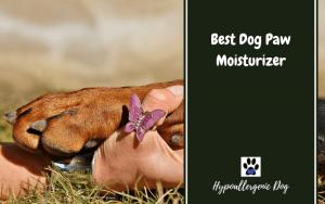Best Dog Paw Moisturizer