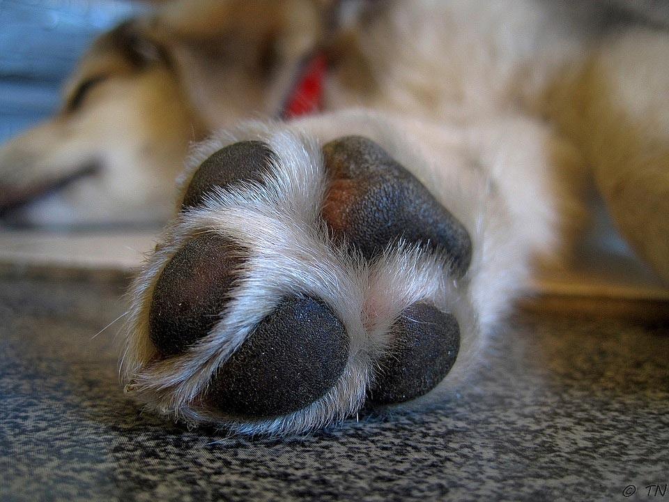 Best-Dog-Paw-Moisturizers