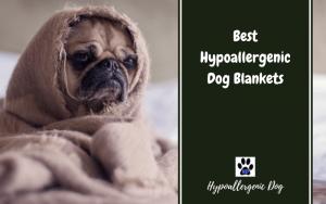 Best Hypoallergenic Dog BLANKETS