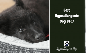 Best Hypoallergenic Dog Beds