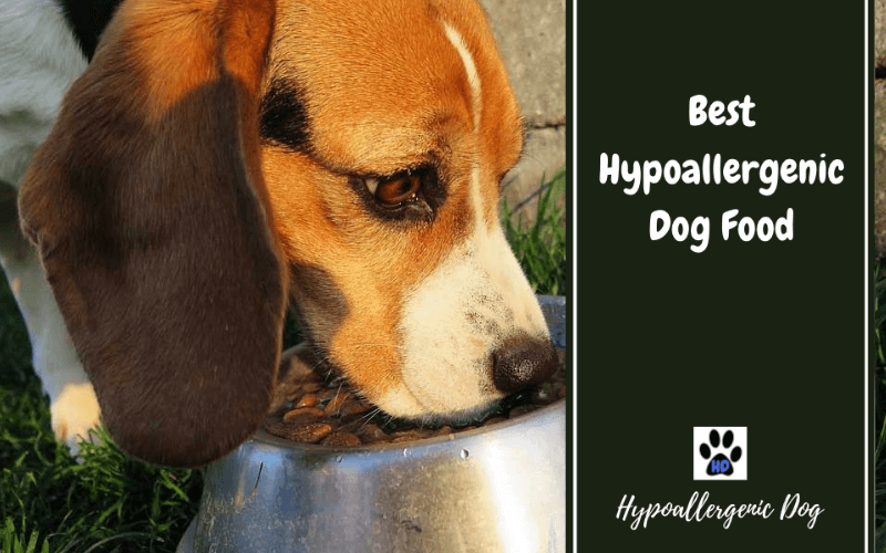 Best Hypoallergenic Dog Food 2020