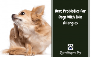 Best Probiotics for Dog Skin Allergies
