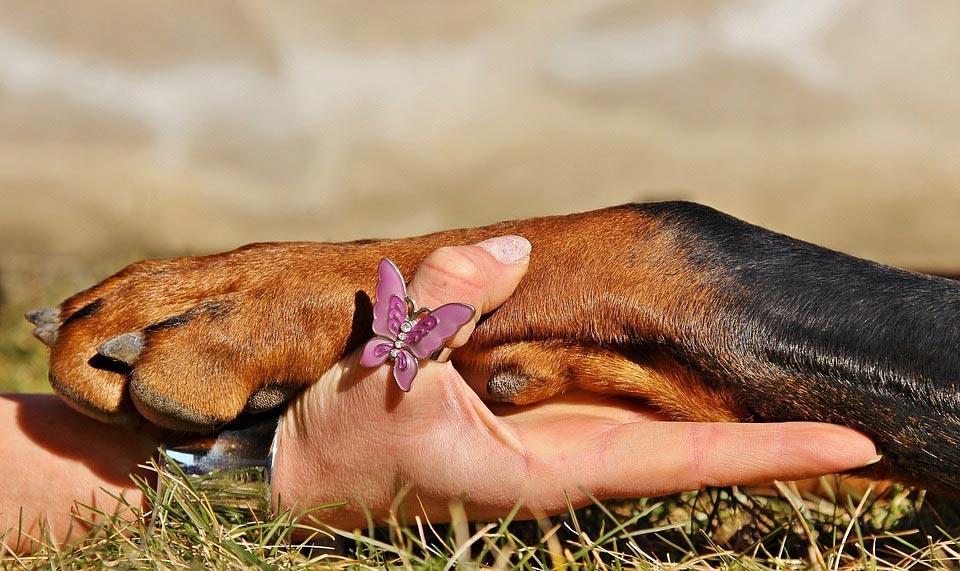 Do-My-Dogs-Paws-Need-Moisturizer