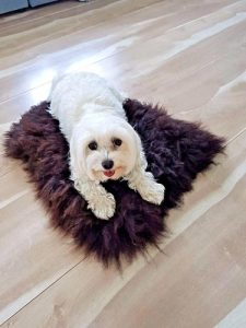 HappyFrog-100-Genuine-Sheepskin-Dog-Blanket