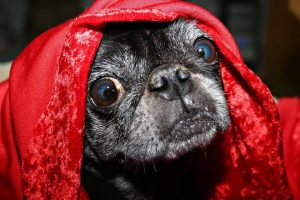 Hypoallergenic-Dog-Blankets-Frequently-Asked-Questions