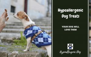 Hypoallergenic dog treats