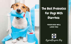 The Best Probiotics for Dogs With Diarrhea
