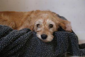 Top-Hypoallergenic-Dog-Blankets