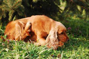 best-dog-probiotics-scratching-dog