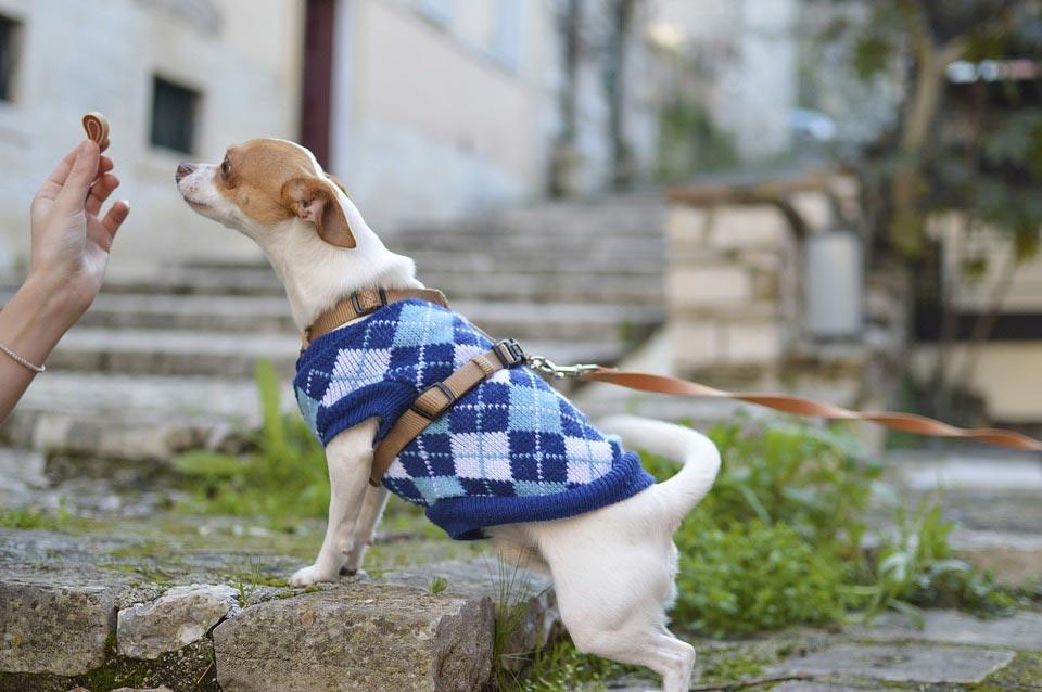 best-hypoallergenic-dog-treats