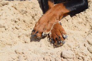 best-paw-balm-for-dogs
