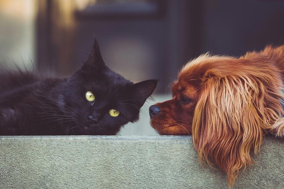 dog-cat-pet-hair-vacuum