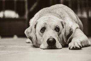 dog-probiotics-side-effects