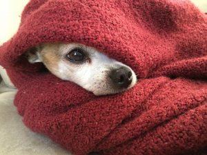 hypoallergenic-dog-blankets-Is-My-Dog-Blanket-Causing-Allergy-Symptoms