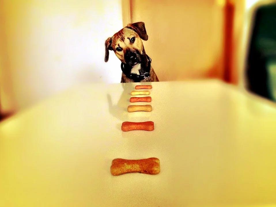 hypoallergenic-dog-treats-royal-canin