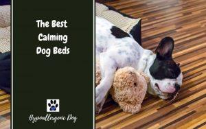 Calming-dog-beds.