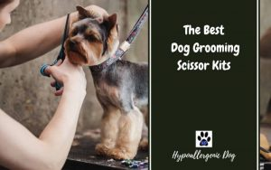 best-Dog-grooming-scissor-kits