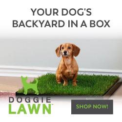Indoor Dog potties