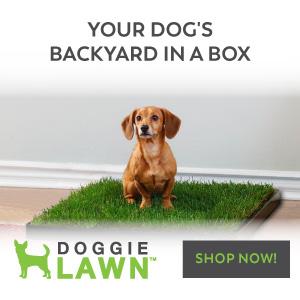 Dog potty lawn